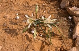 negev desert botanical garden