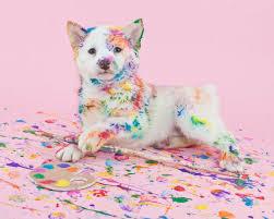 puppy desktop wallpaper id 46842 for