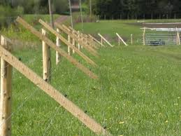 Deer Fence Ideas Why Do You Need One And How To Choose It