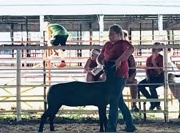 Congratulations to Addie Johnston, her... - Dubois Club Lambs & Boer Goats    Facebook
