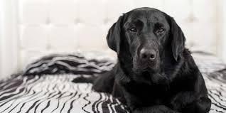 Pet Owner Friendly Features Fido S Fences
