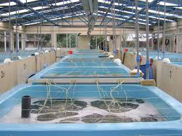 Rupali Fish & Prawn Hatchery Ltd. - Home | Facebook