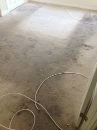 carpet cleaning and expert sns