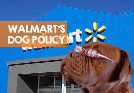 Are Dogs Allowed In Walmart The Not So Dog Friendly Policy