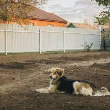Dog Fence Ideas Best Indoor And Outdoor Solutions