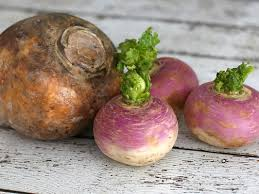 differences between turnips and rutabagas