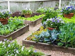 my vegetable garden in raised beds