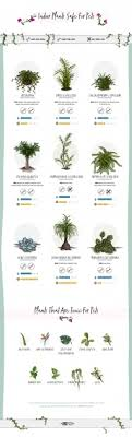 incredible poisonous plants for dogs