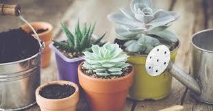 5 plantas suculentas de interior