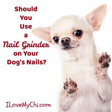 nail grinder on your dog s nails