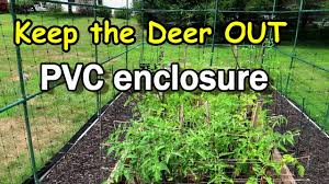Pvc Fencing To Keep The Deer Out Of Our Raised Garden Bed Youtube