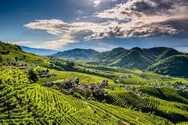 Viaggio a Valdobbiadene tra vigne, colline e capolavori architettonici