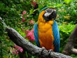 s bird parrot macaw wallpaper