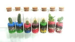 live miniature cactus succulent no mess