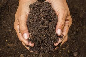 know how to sterilize the garden soil
