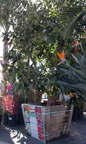 fruit trees in southern california