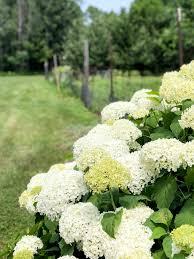 vegetable gardening for beginners 5