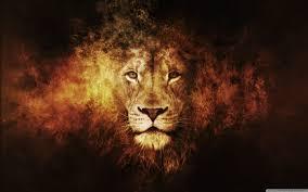 خلفيات أسود Lion أسد حيوانات طبيعة 9