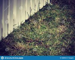 Green Grass And White Wooden Fence Stock Photo Image Of Green Clear 168099214