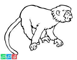 رسومات اطفال للتلوين حيوانات بجودة عالية للتحميل و التلوين قصص اطفال