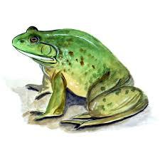 Bull Frog Printed Vinyl Decal Wildlife Auto Truck Car High Quality Sticker Ebay