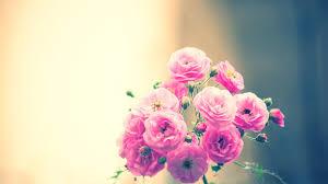 مجموعة من اجمل صور الزهور عالية الجودة Hd صور زهور Rose