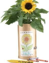 sunflower garden in a bag kids8217 kit