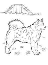 Husky Coloring Pages In 2020 Kleurplaten Dieren Tekenen Honden