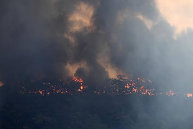 "Image result for Lack of forecast rains to prolong Australian bushfires threat"""