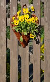 Garden Pansy Decorations In A Basket On A Wooden Picket Fence Stock Photo Picture And Royalty Free Image Image 40288898