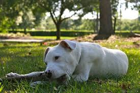 home remes for worms in dogs