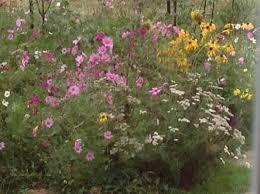 dry area wildflower seed mix american