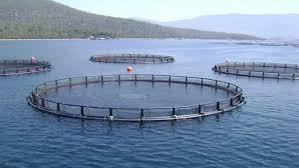 Iran, Norway to culture 5,000 tonnes of saltwater fish