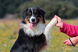 Clicker Training – Wag Pet Boutique