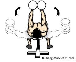 4 day workout routine building muscle 101