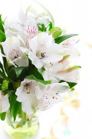 beautiful flowers images free stock