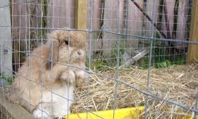 how to keep a free range outdoor rabbit