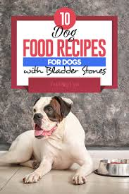 10 homemade dog food for bladder stones