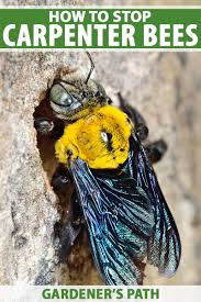 how to stop carpenter bees from