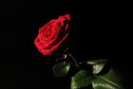 Red De Naomi Rosa Roja - Foto gratis en Pixabay