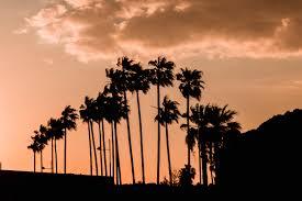 أشجار النخيل خلفية الشفق الخطوط العريضة الظلام السماء