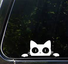 The Latest Funny Cat Car Decals Catsegory Com