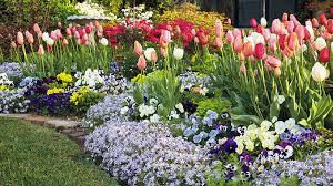 Grow Your Best Tulips Ever | Garden Gate