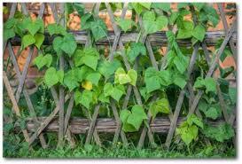 vertical vegetable gardening plans and