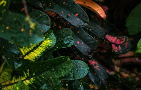 colorful wallpaper wet nature