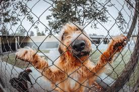 Perimeter Dog Receiver Collar 7k 10k Compatible 700series Invisible Fe