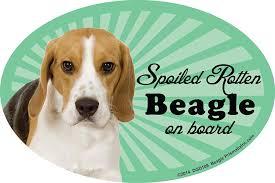 Amazon Com Prismatix Decal Beagle Car Magnets Spoiled Rotten Beagle Oval 6 X 4 Auto Truck Refrigerator Mailbox Funny Car Decals Dog Magnet Beagle Automotive