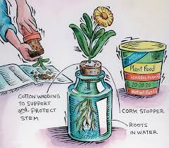 how to start a hydroponic garden boys