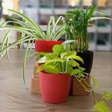 best plant nursery garden