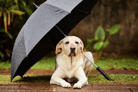 Dogs Queensland urges pet owners to keep dogs safe in the rain ...